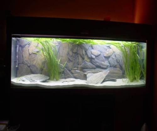 Mbuna for Sale  AquariumFishnet