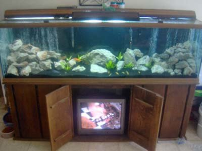 Malawi cichlids malawi species profiles african cichlids for How many gallons in a fish tank calculator